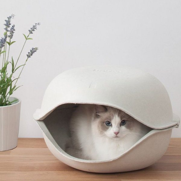 Cat Shell by Oppo