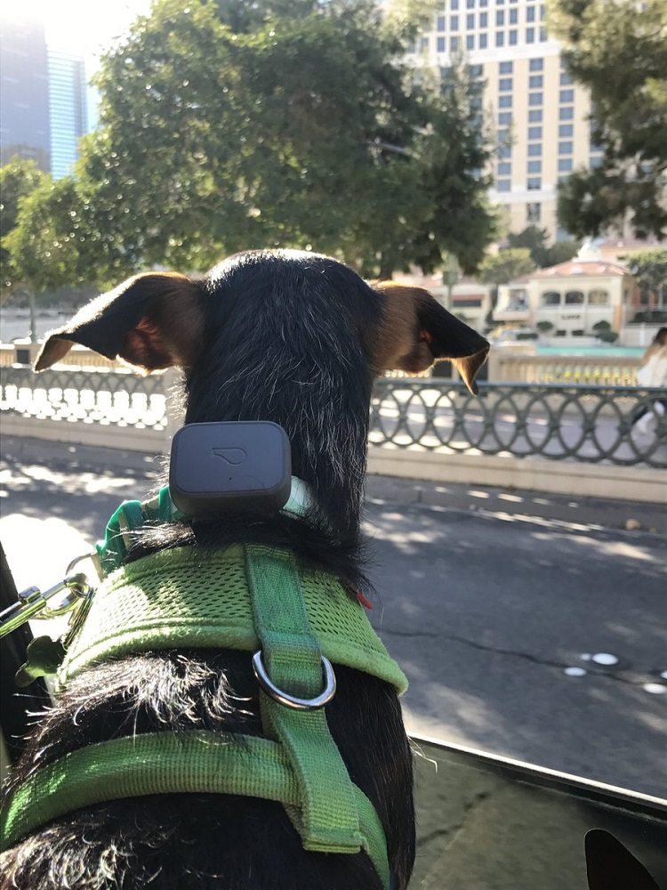 Tagg Pet GPS Tracker