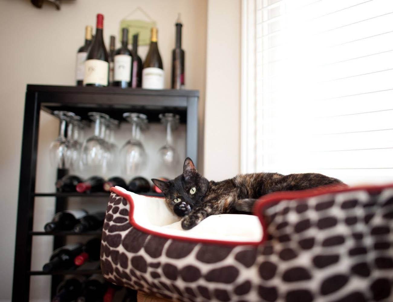 Kalahari Lounge Bed by P.L.A.Y.