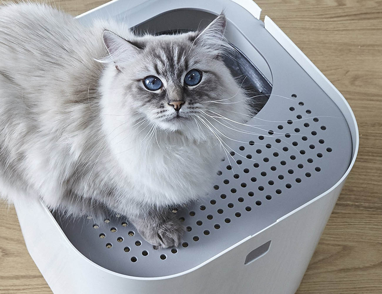 ModKat Litter Box – For Your Feline Friend