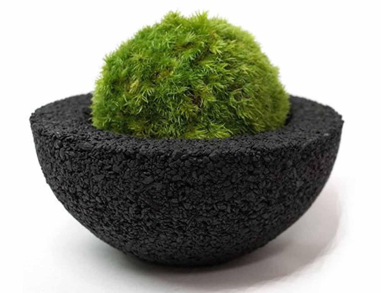 Moss Ball Pot