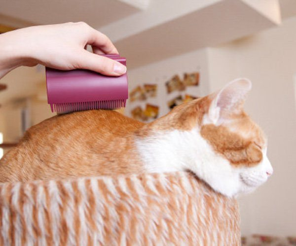 Oppo Groomo – Smart Looking Cat Brush