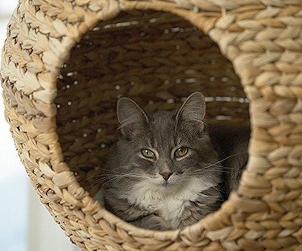 Sphere Cat Tower – With a Comfy Interior Cushion