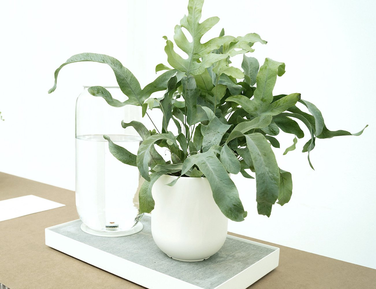 "<em class=""algolia-search-highlight"">Table</em>au - Automatic House Plant Watering Tray"