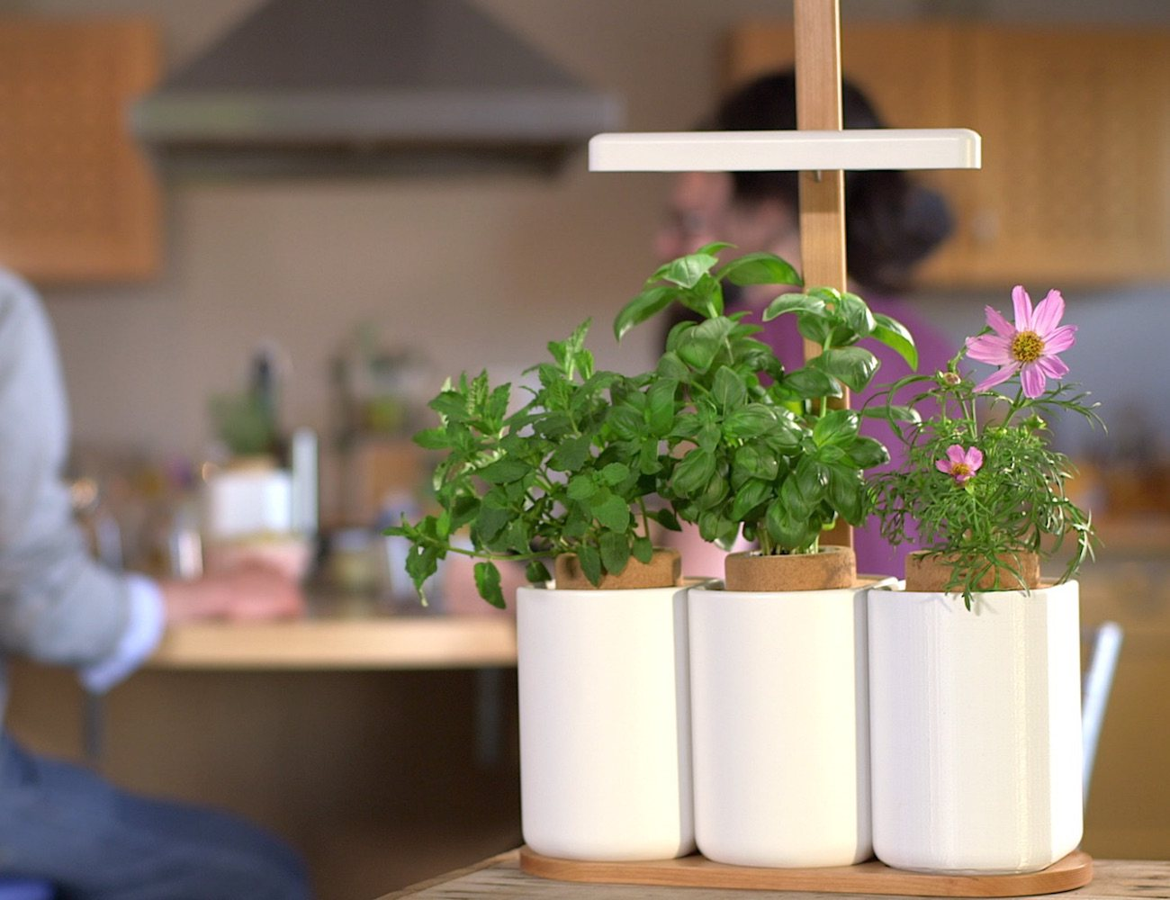Lilo – Grow Fresh Herbs All Year Round