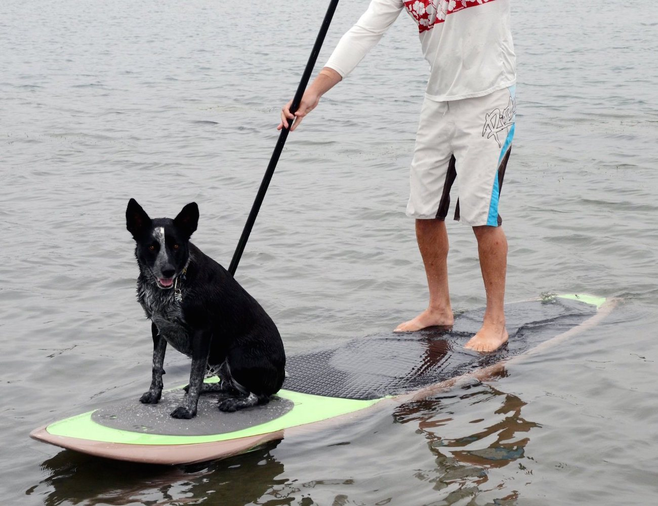 Pup Deck – SUP Traction Pad for Dogs