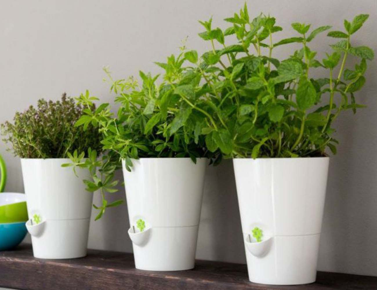 Smart Planter – Designed for Kitchen Herbs
