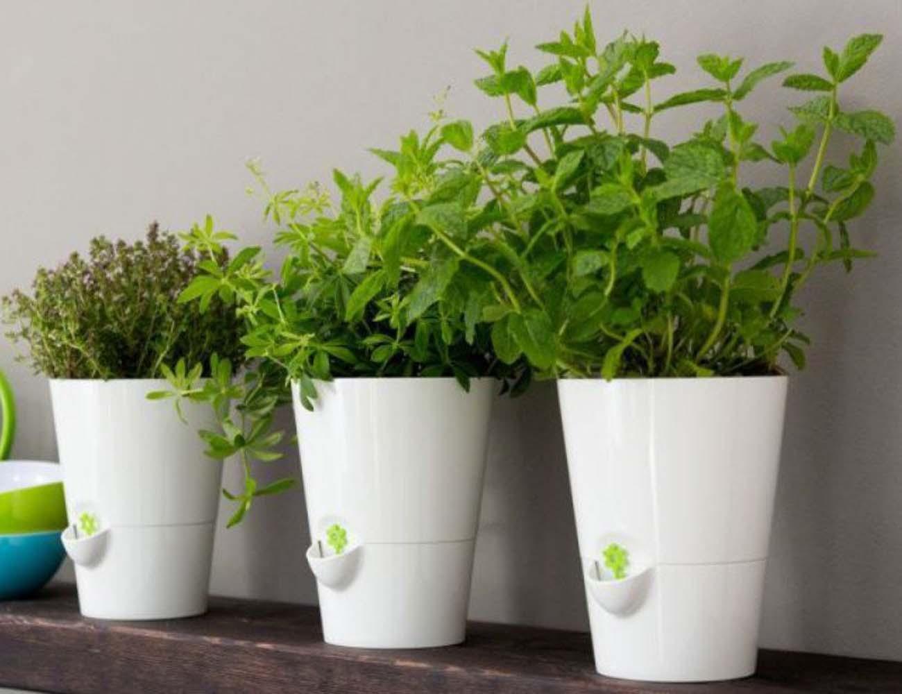 Smart Planter – Designed for Kitchen Herbs