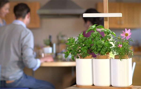 Lilo Gives Your Fresh Herbs the Correct Growth Medium At Home