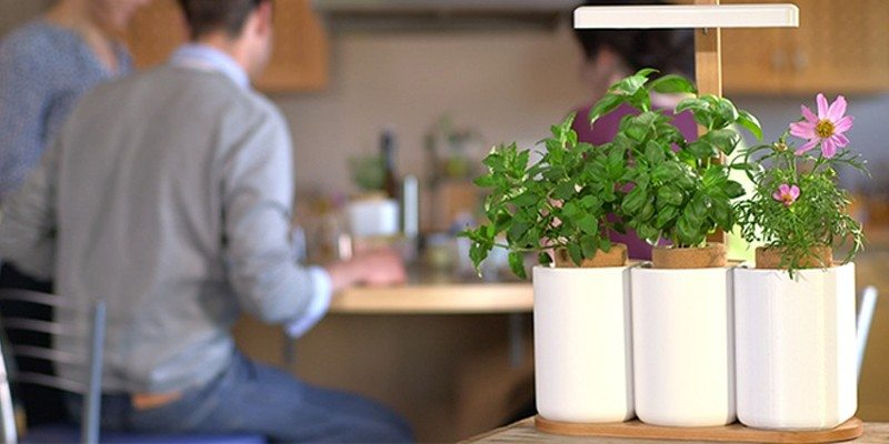 Lilo indoor planter