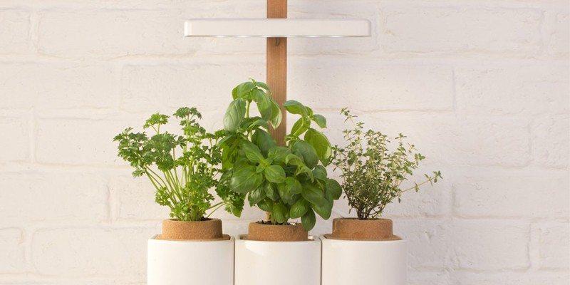 Lilo planter review