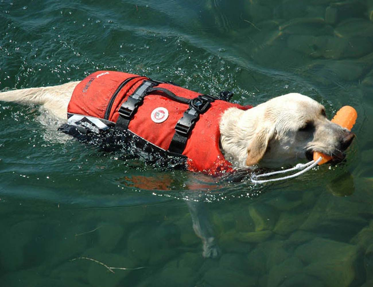 EzyDog – Safe and Comfortable Doggy Flotation Device (DFD)