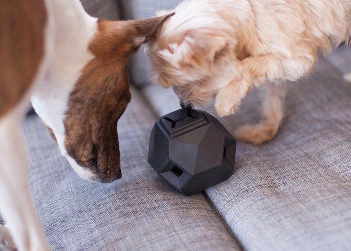 Odin Modular Puzzle Treat Dog