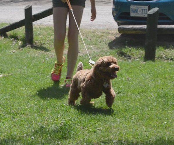 Reelleash – Innovative Dog Leash With Unique QR Code