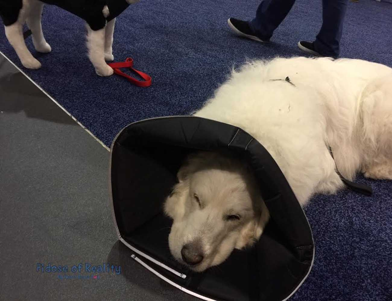 The Comfy Cone – E-Collar for Your Cats and Dogs