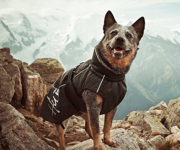 Winter+Jacket+For+Dogs+By+Hurtta