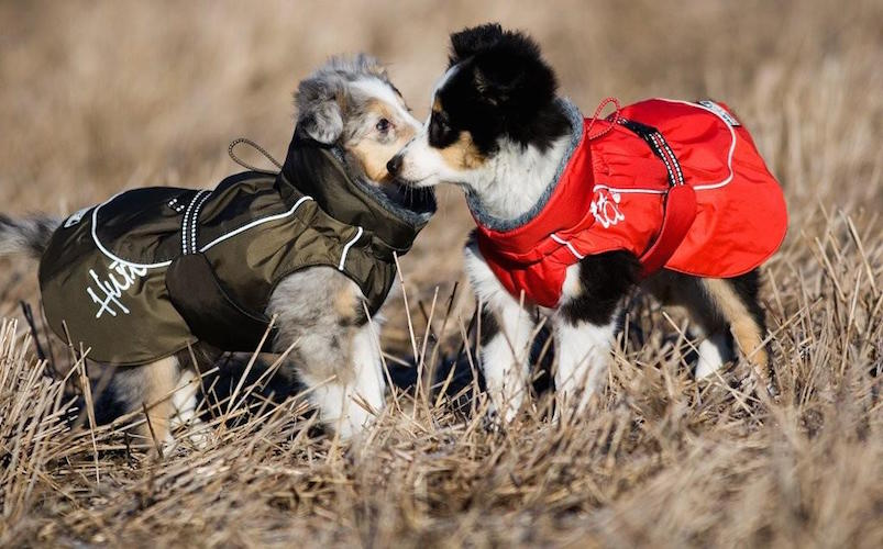 Winter Jacket For Dogs by Hurtta