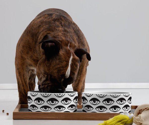 Eyes On You Pet Bowls & Tray