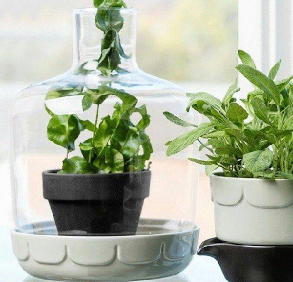 Greenhouse by Sagaform