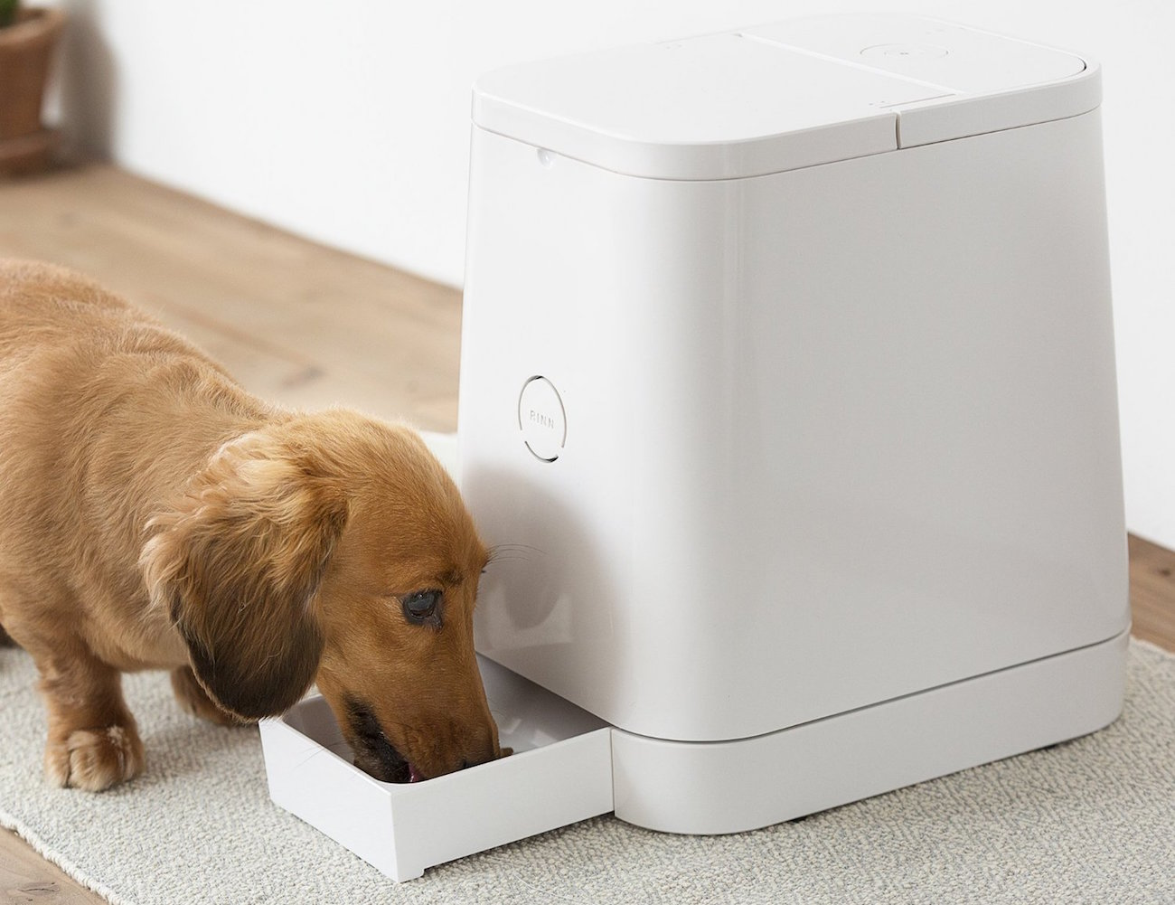PETLY – Automatic Pet Feeder