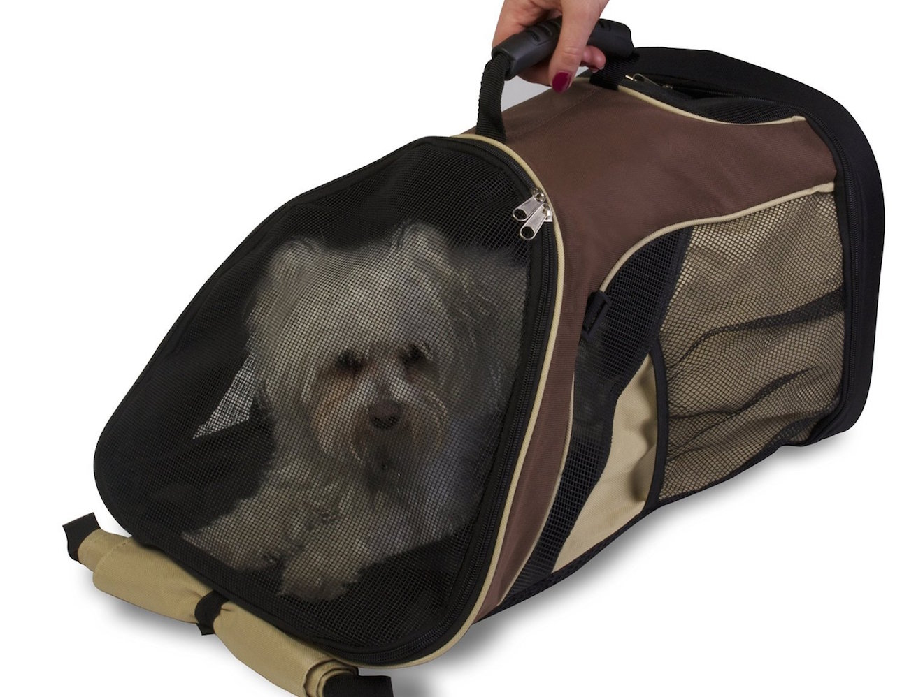 Pet zone backpack pet carrier review 187 the gadget flow