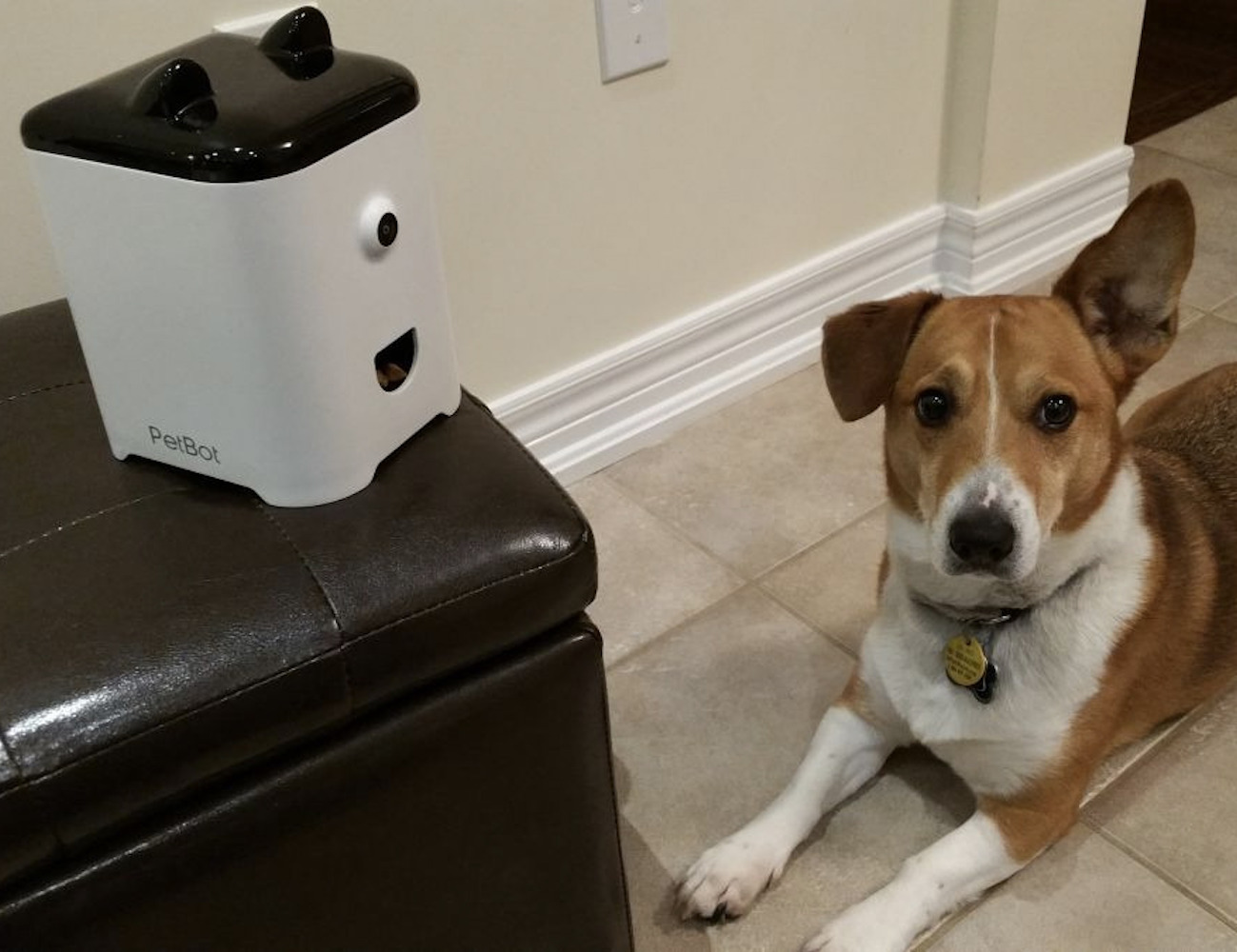 PetBot – Pet Camera and Treat Dispenser