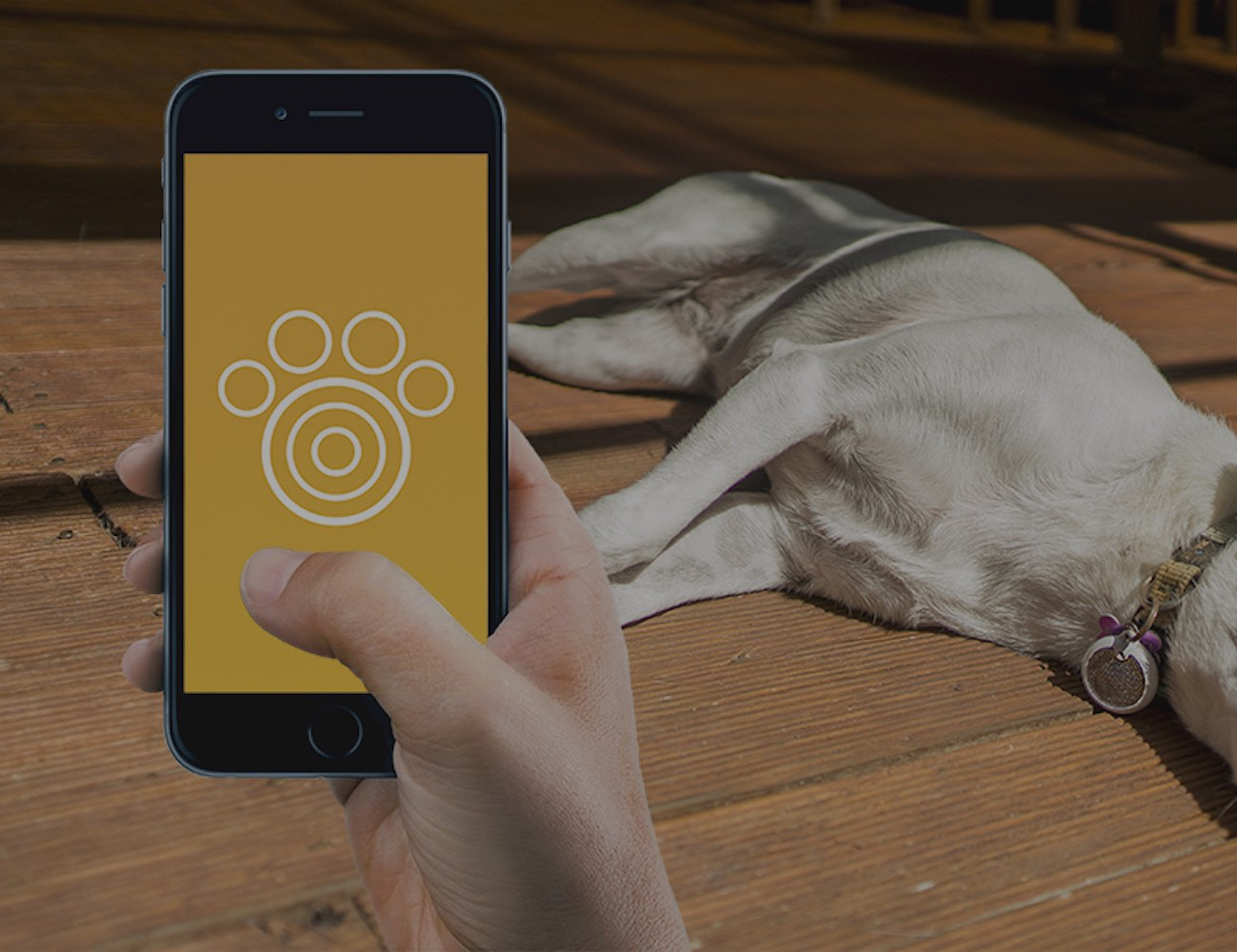 Petguard – One Stop Solution to Train Your Pets