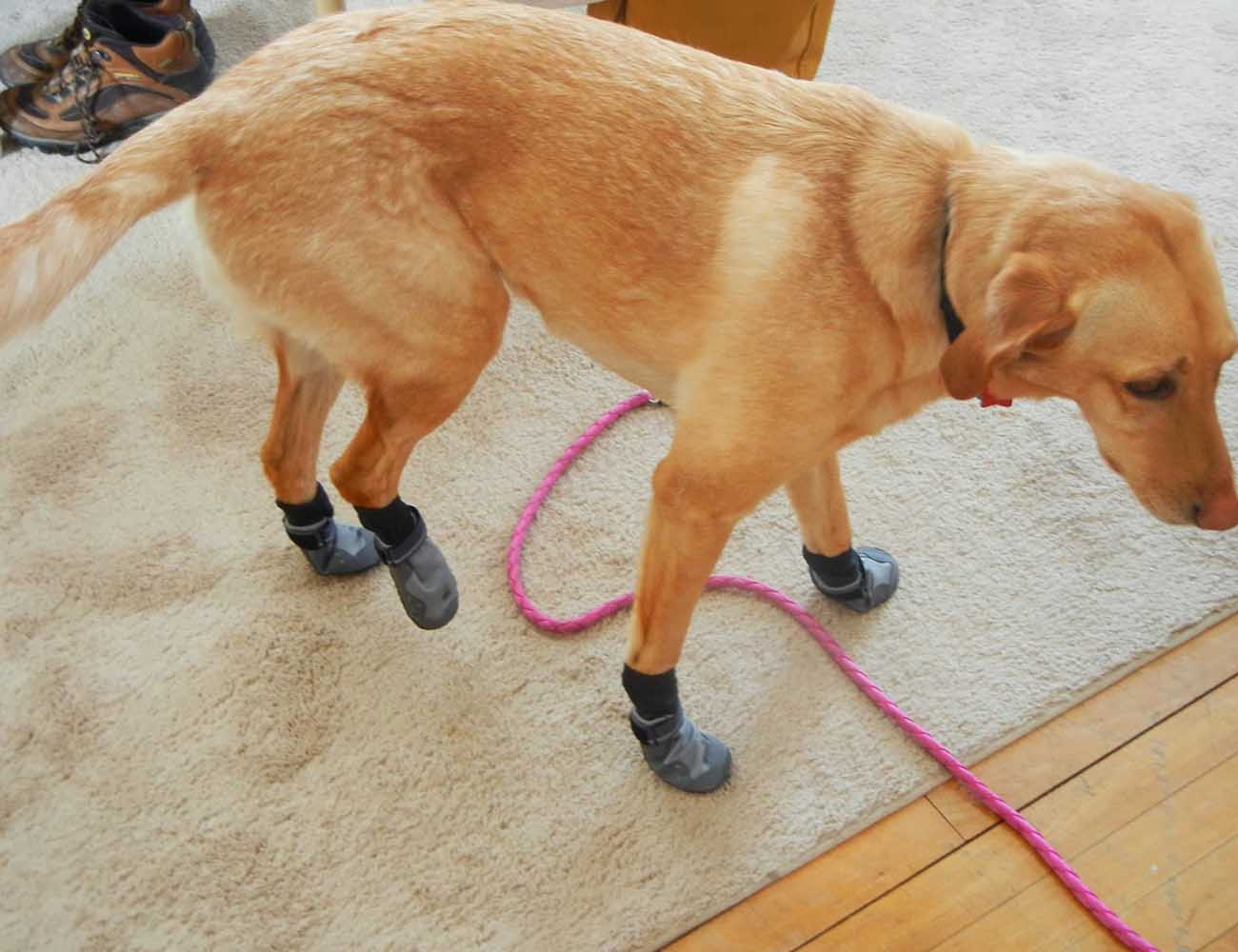 Summit Trex – Dog Boots for the Outdoors From Ruffwear