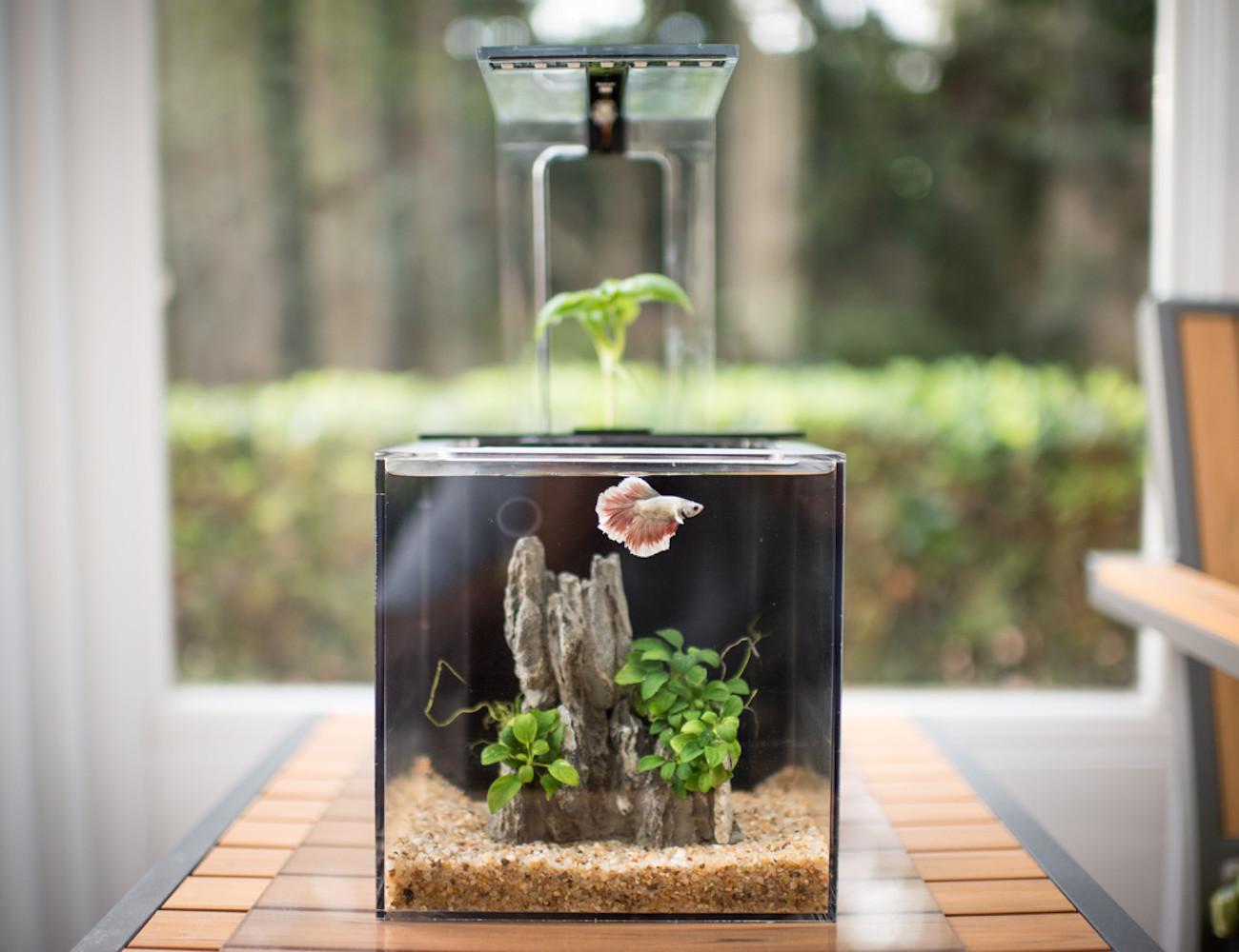 EcoQube C – Your Window To Nature loading=