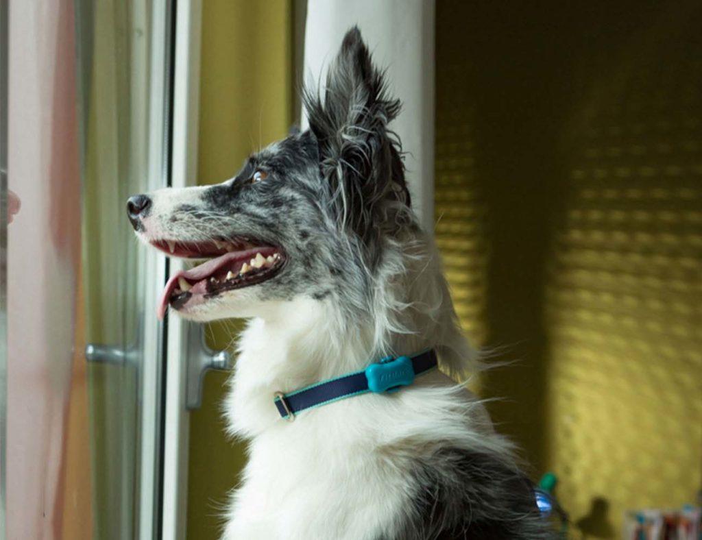 FitBark 2 Dog Activity Tracker