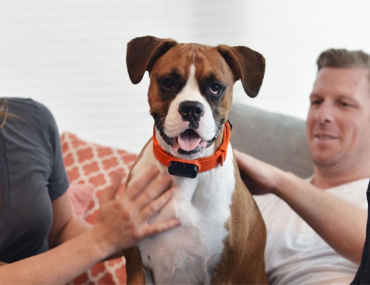 Nuzzle Dog Collar Shipping
