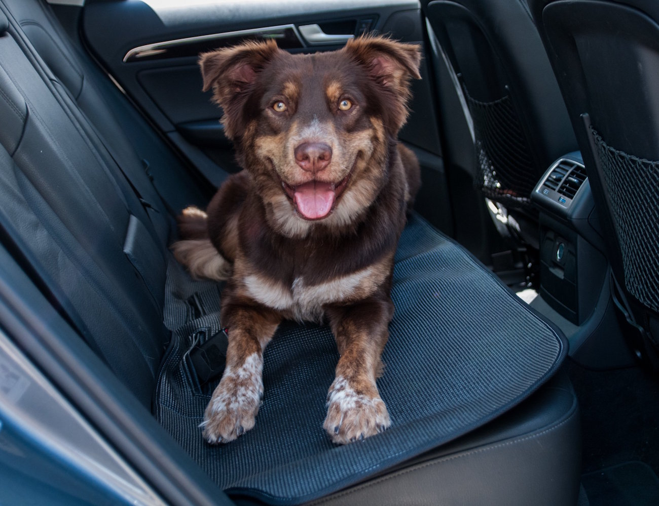 Stayjax+Stealth+Seat+Mat+For+Your+Dog