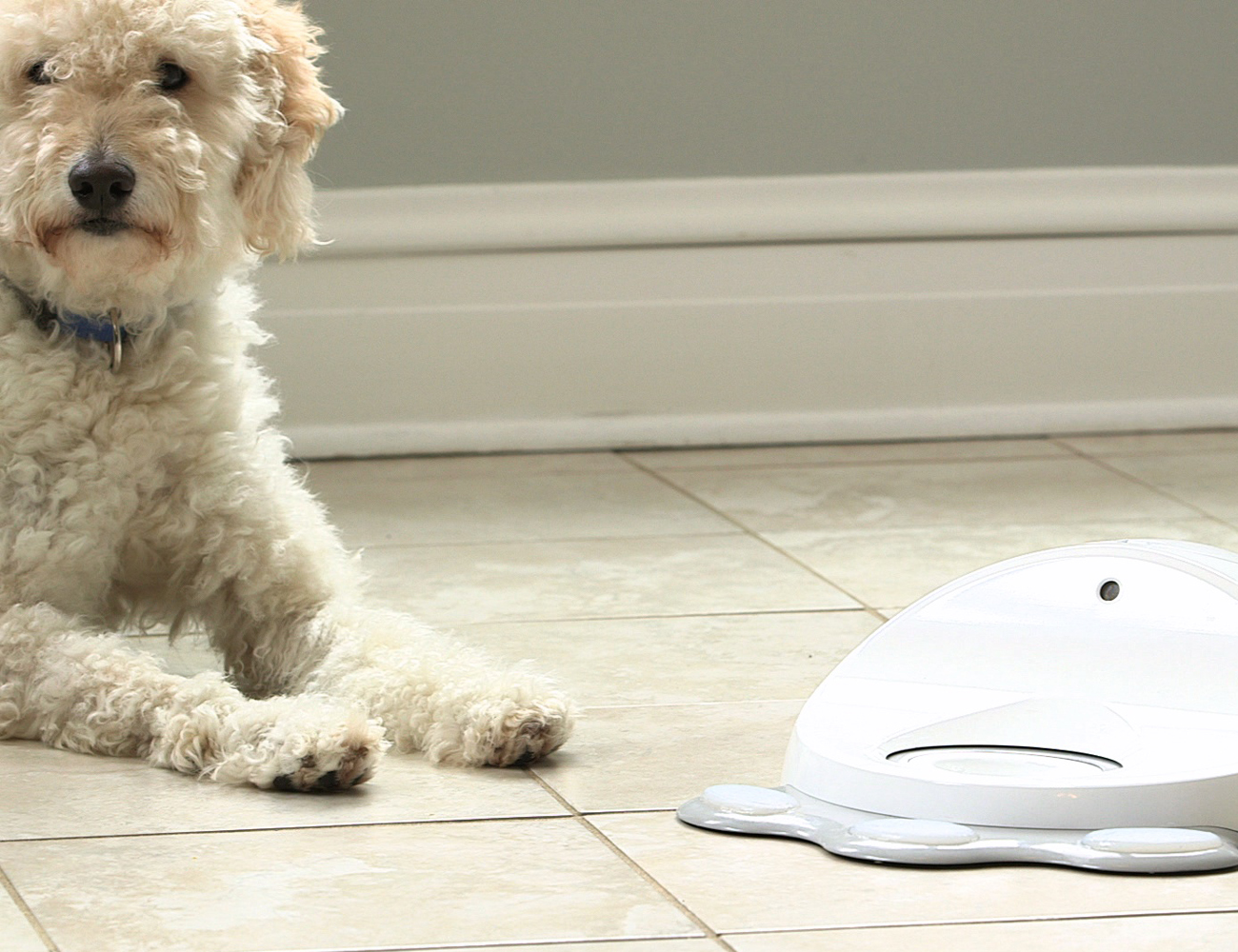CleverPet – The Dog Engaging Treat Machine