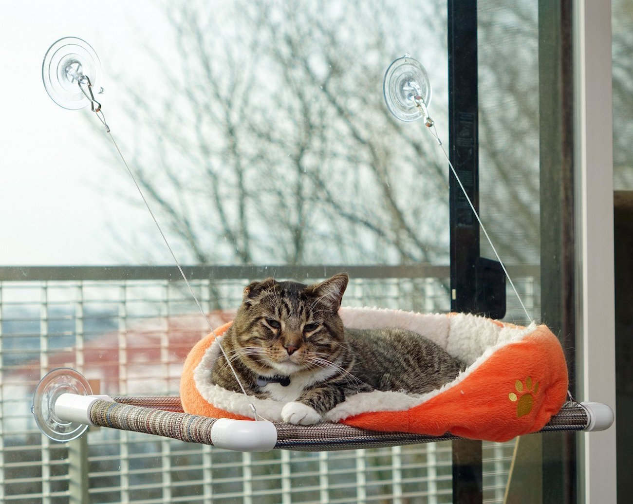 Kitty Cot – The World's Best Cat Perch
