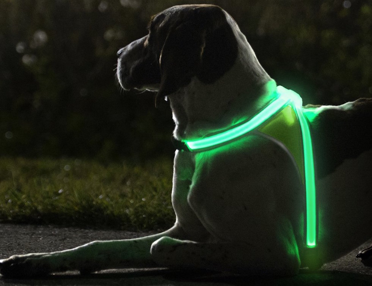 noxgear-lighthound-illuminated-dog-vest-01