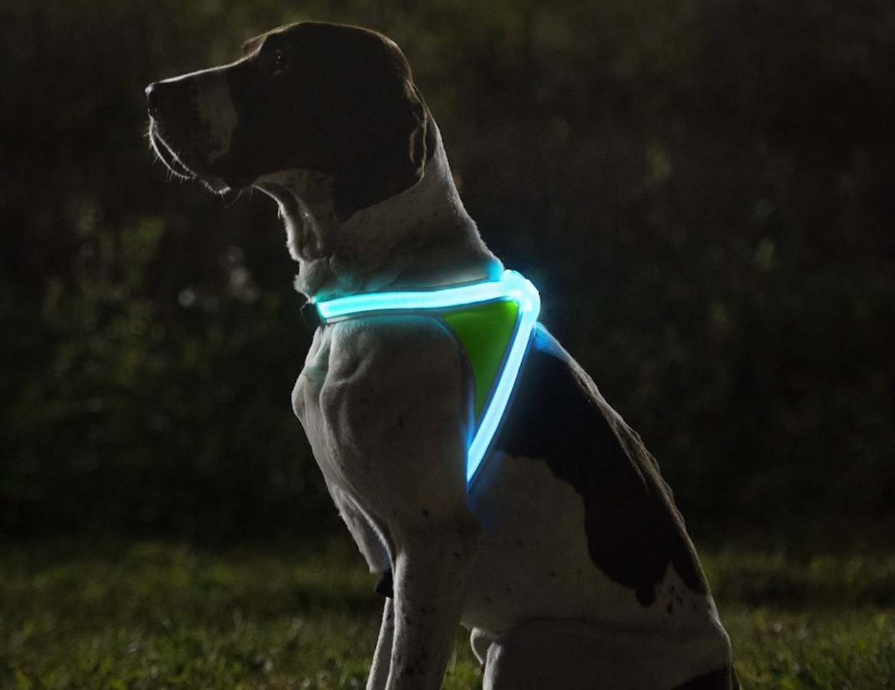 noxgear-lighthound-illuminated-dog-vest-02