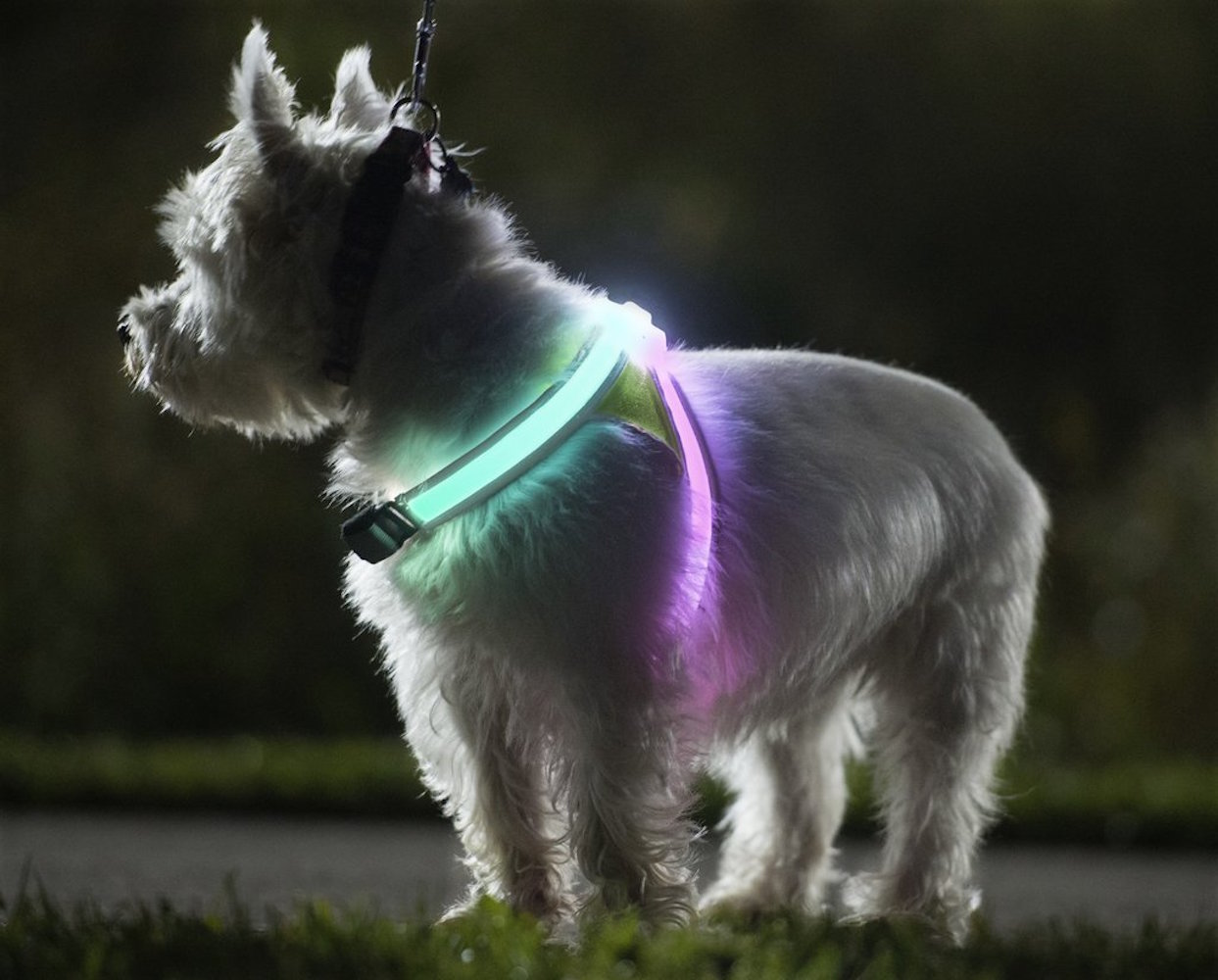 noxgear-lighthound-illuminated-dog-vest-03