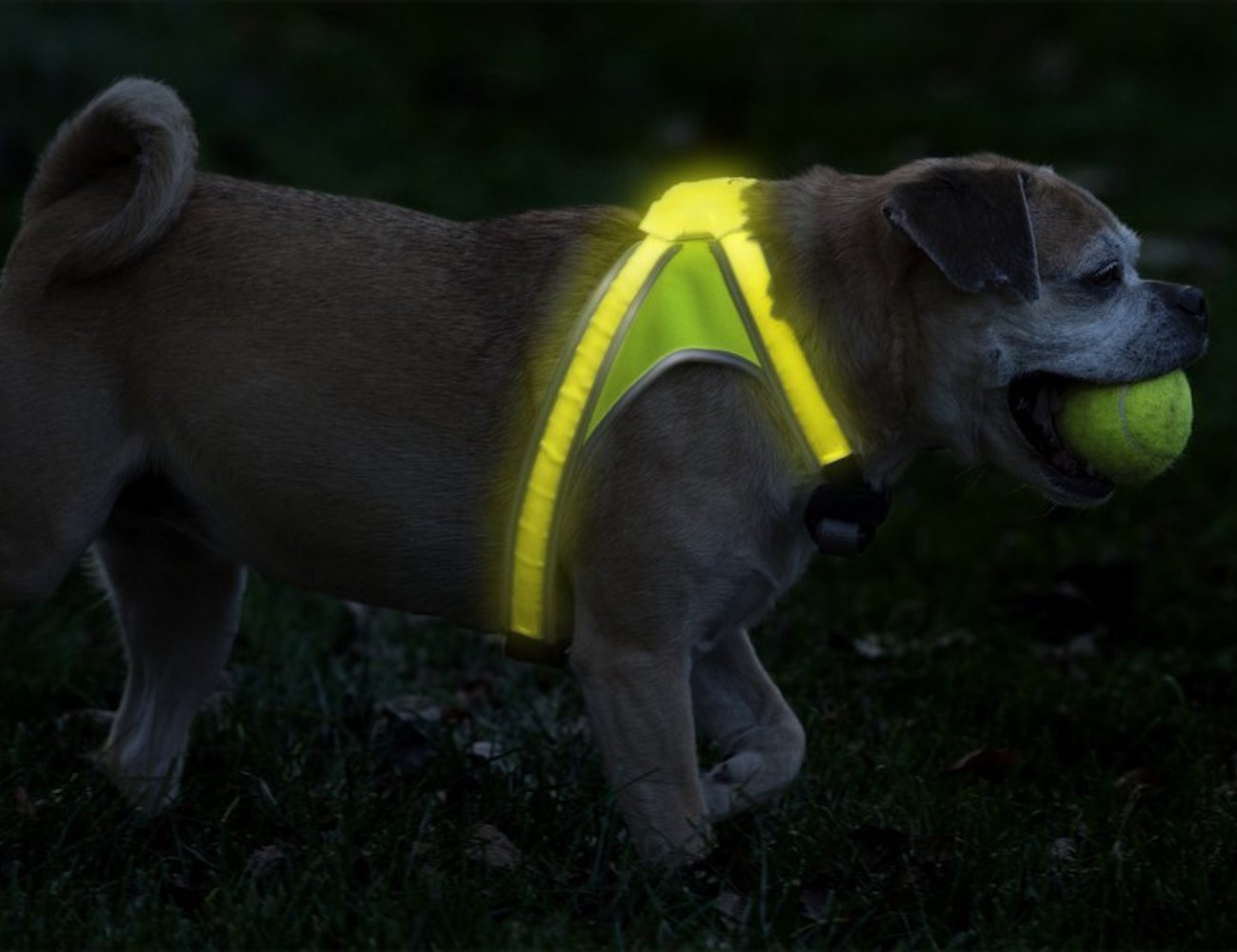 noxgear-lighthound-illuminated-dog-vest-05