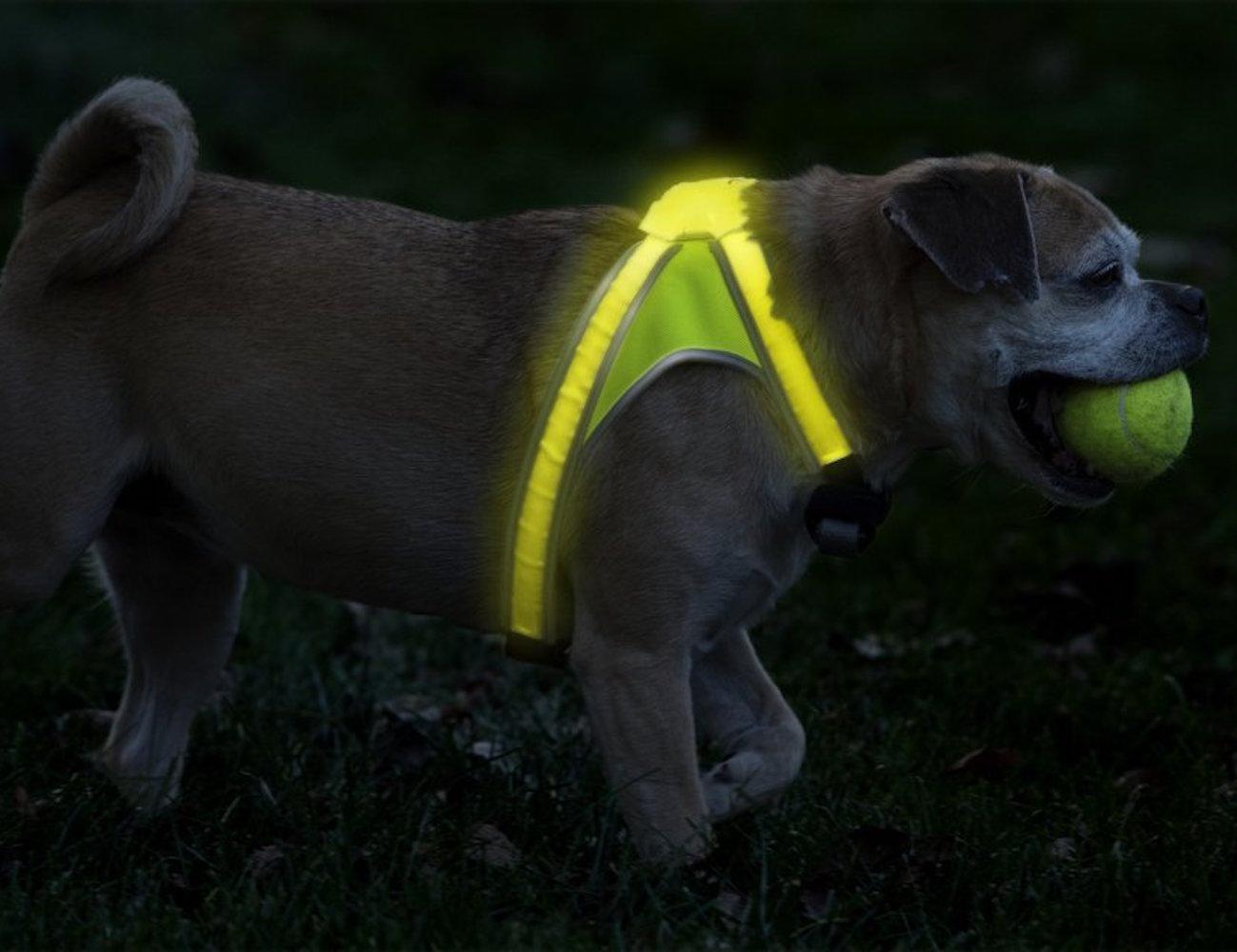 Noxgear LightHound Illuminated Dog Vest