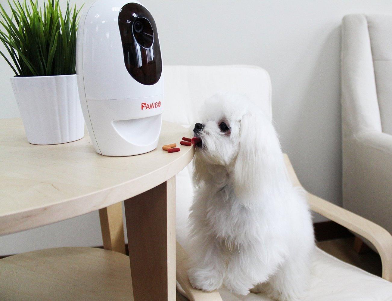 Pawbo Wi-Fi Pet Cam and Treat Dispenser