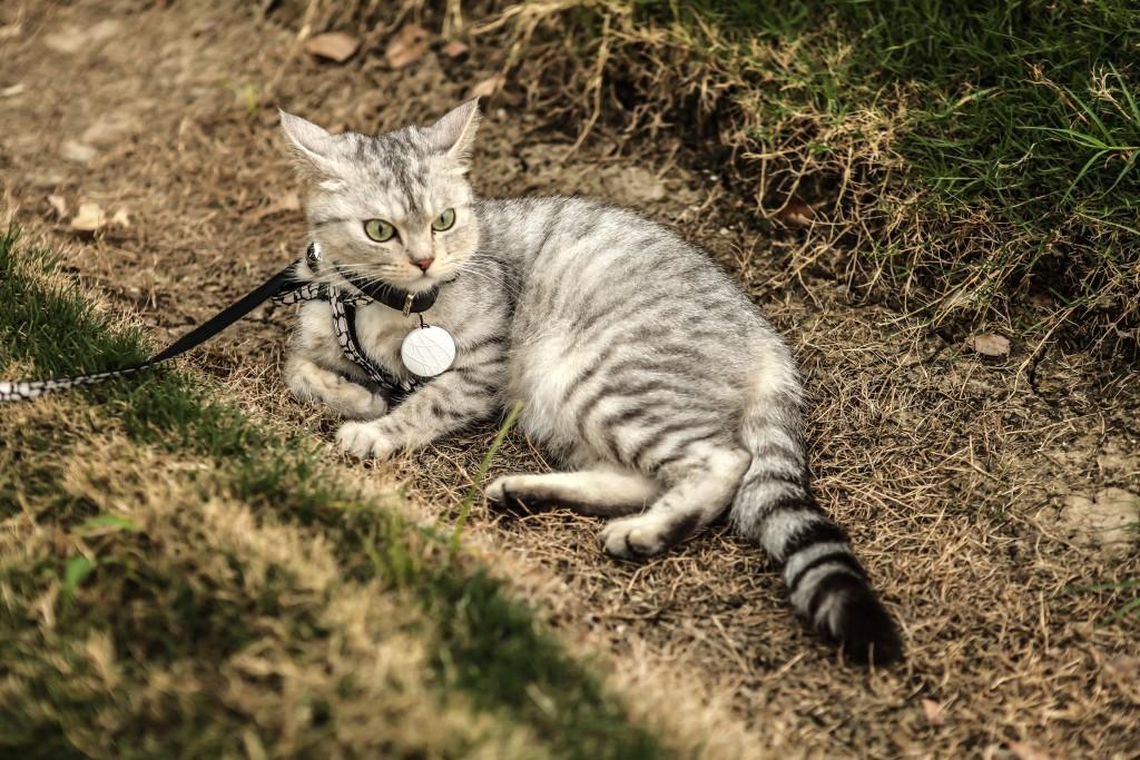 Wuvo Cat