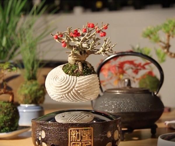 Air Bonsai Floating Star