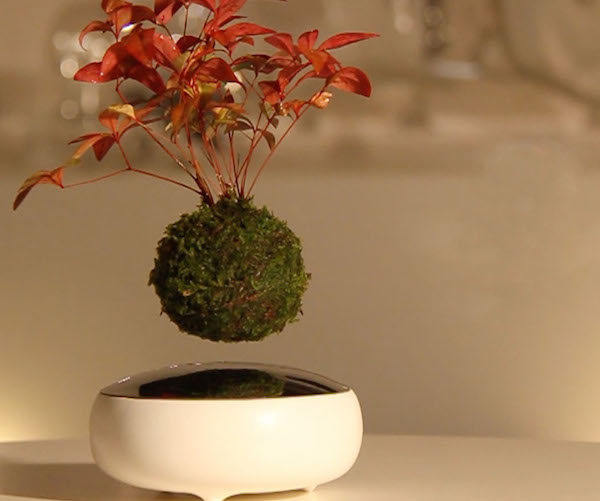 Air Bonsai Floating Star
