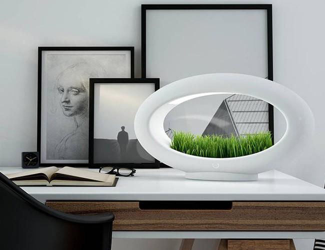 Grasslamp – The Desktop Garden and Light