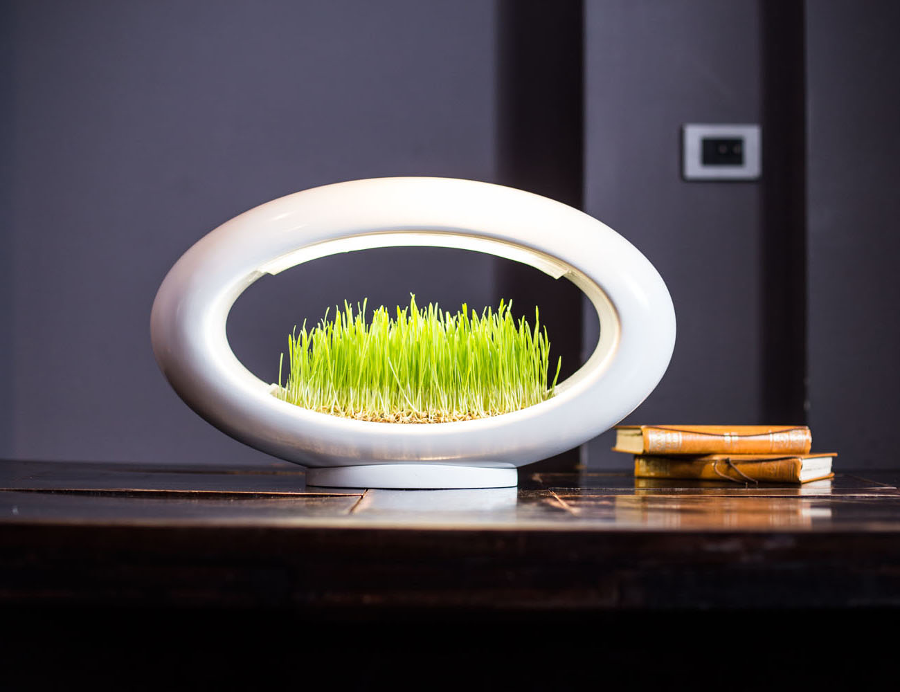 Grasslamp The Desktop Garden and Light Review The Gadget Flow