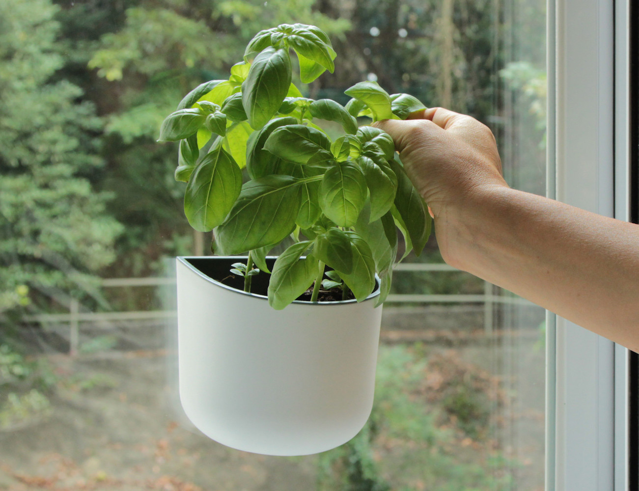 Eden Suction Planter by Okidome » Review