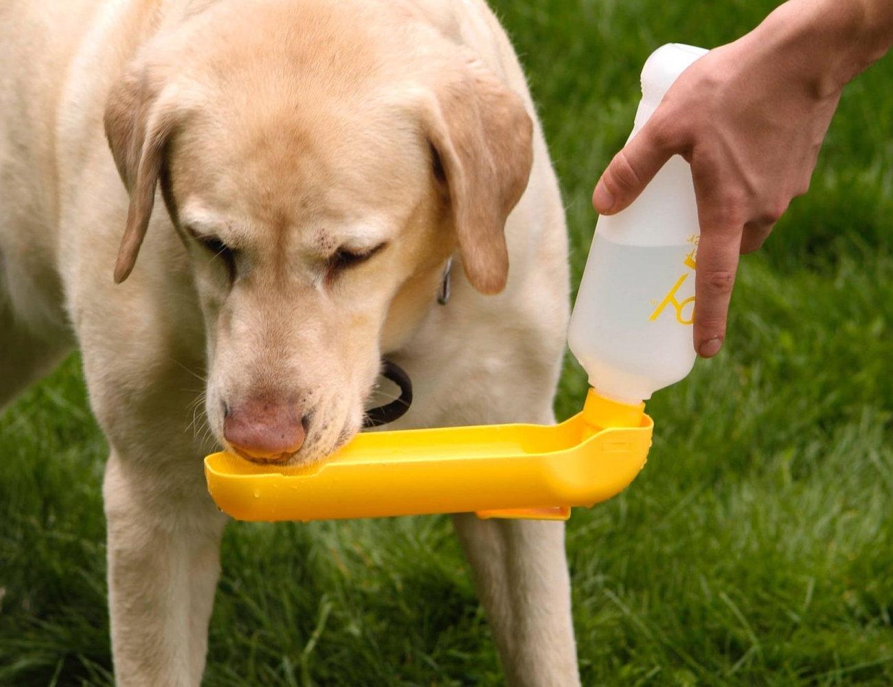 Gulpy – The Pet Water Dispenser