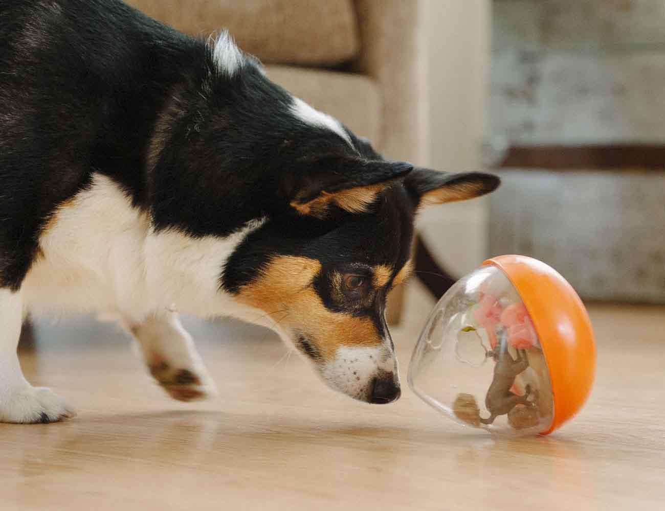 Wobble Ball 2.0 Dog Toy