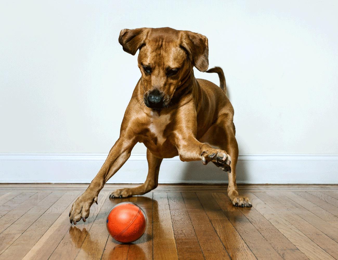 PlayDate – World's First Pet Camera in a Smart Ball