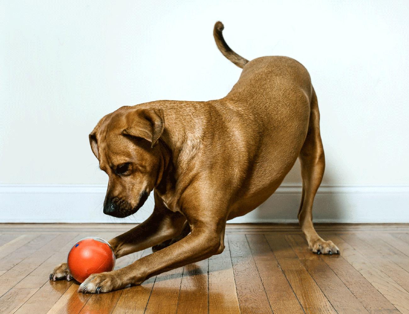 Playdate World S First Pet Camera In A Smart Ball